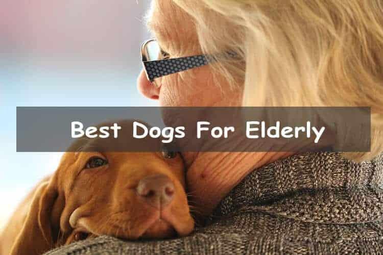 Best Dogs For Elderly