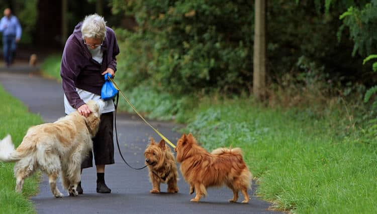 Top Dogs For Seniors