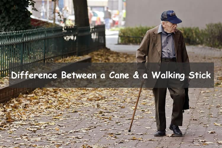 Difference between a cane and a walking stick